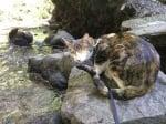 Котка на разходка със стопанина си