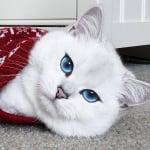 Котка с невероятни очи
