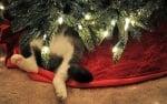 Котка под елхата