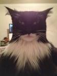 Котка с бяла брада