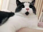 Котка с брадичка