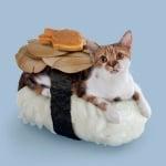 Котка с дафинов лист и бисквита върху суши