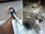 Котка с химикал
