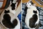 Котка с котка на гърба