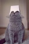 Котка с кутия от храна върху главата