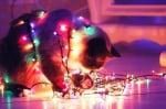 Котка с лампички