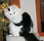Котка с маймуна на тялото