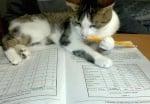 Котка с молив