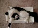 Котка в тясно пространство