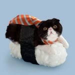 Котка с вратовръзка върху топка ориза за суши