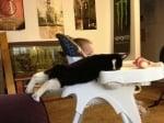 Котка се храни с бебе