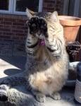 Котка се крие с лапичките си
