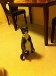 Котка в сиво и бяло