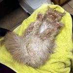 Котка след баня