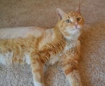 Котка след операция