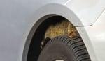 Котка спи на автомобилна гума