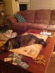 Котка спи на масата