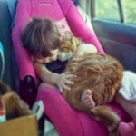 Котка спи с бебе