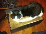 Котка спи в куфарче за документи