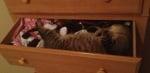 Котка спи в шкафа