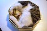 Котка спи в тясна кутия