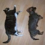 Котка, спяша с куче