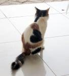 Котка със сърце на крака