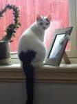 Котка с сърчице на опашката