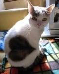 Котка със сърце