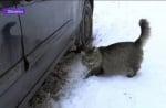 Котка топли изхвърлено бебе