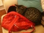 Котка в дамска чанта червена