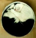Котка в кръгла кутия