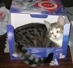 Котка в кутия