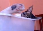 Котка в леген