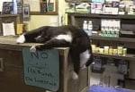 Котка в магазина