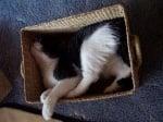 Котка в плетена кошница