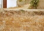 Котка в полето