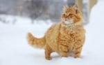 Снежна мъркаща красота