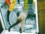 Котка в съдомиалната машина