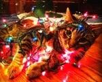 Котка в светещи лампички