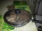 Яйца по котешки