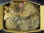 Котка в тясна кутия