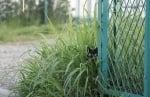 Котка в трева