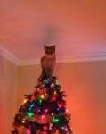 Котка върху елха
