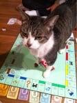 Котка върху настолна игра