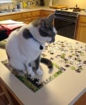 Котка върху пъзел