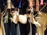 Котка върху закачалките в гардероба