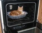 Котка във фурна