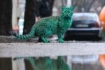 Котка във варна