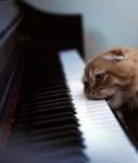 Котка захапала клавишите на пианото